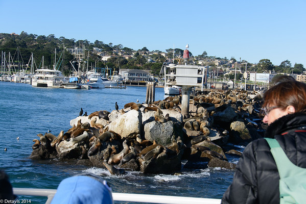 Whale watching off Monterey at Christmas 2014